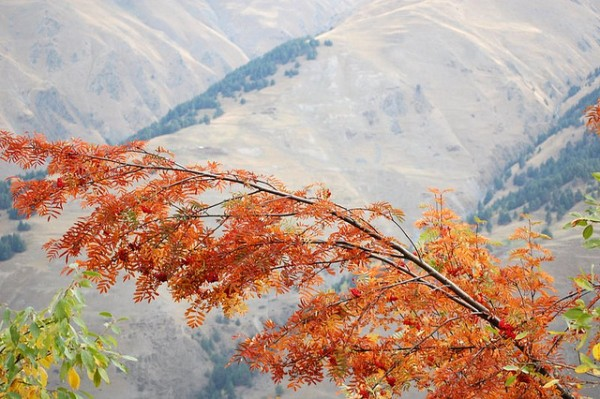 Autumn in Pirikiti Tusheti