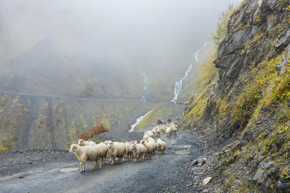 Sheep drive Tusheti